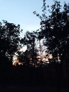 Tree Shilouette