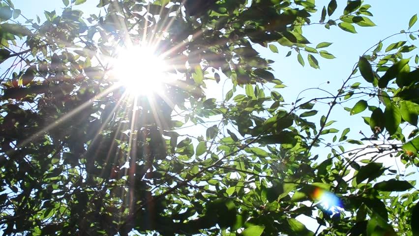 sun-on-trees